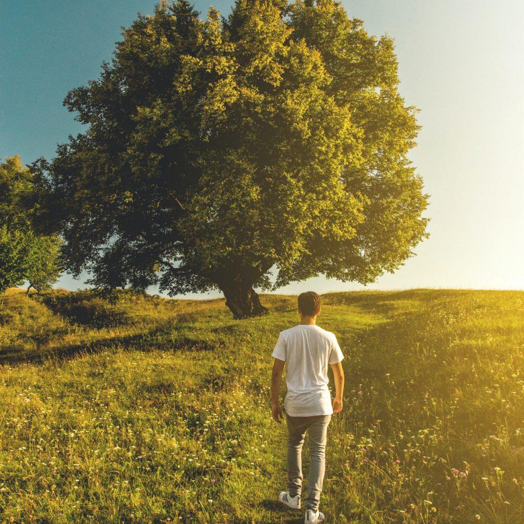 strom a dite